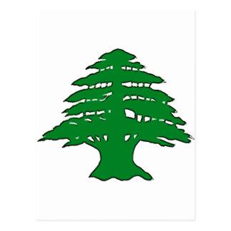 Lebanese Cedar Postcards