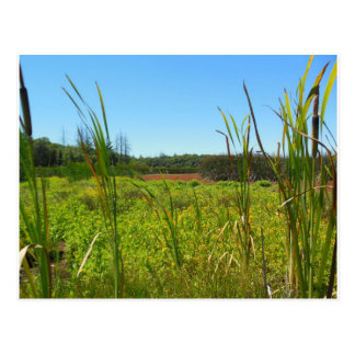 Ledson Marsh Annadel State Park Santa Rosa CA Postcard