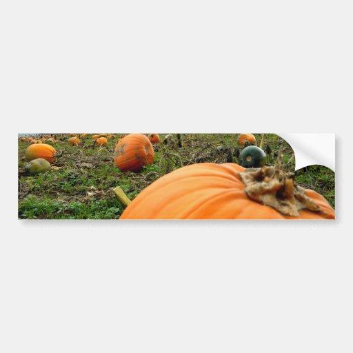 Leftover Pumpkins Bumper Stickers
