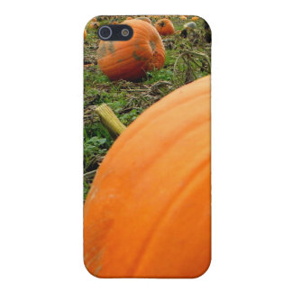 Leftover Pumpkins iPhone 5/5S Cover