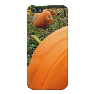 Leftover Pumpkins iPhone 5/5S Covers