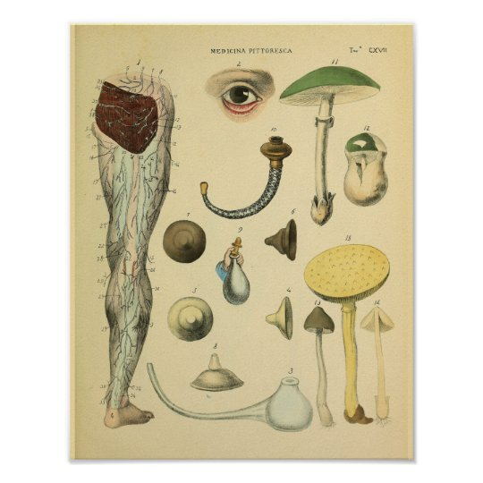 Leg Nerves Anatomy Vintage Medical Art Print