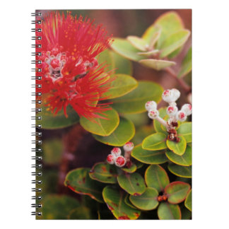 Lehua Blossoms In Hawaii Volcanoes Notebook