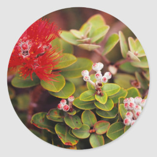 Lehua Blossoms In Hawaii Volcanoes Round Sticker