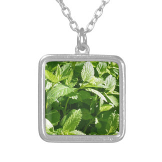 Lemon Balm Plant Silver Plated Necklace
