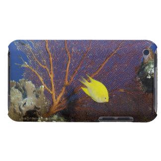 Lemon damsel iPod touch cases