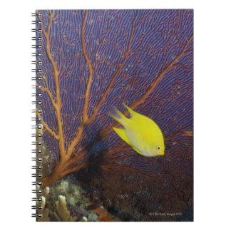Lemon damsel notebook