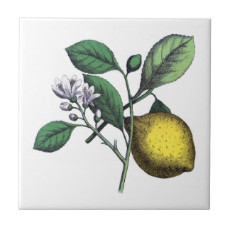 Lemon, fruit and flower tile
