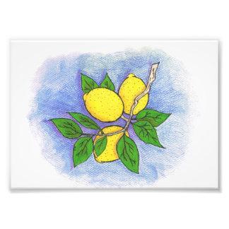 Lemon Illustration Photo Print