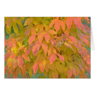 """Lemon Yellow and  Salmon Colored Leaves"" (photog) Greeting Card"