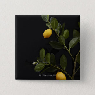 Lemons still on their Branch 15 Cm Square Badge
