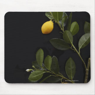 Lemons still on their Branch Mouse Mat