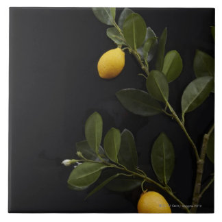 Lemons still on their Branch Tile