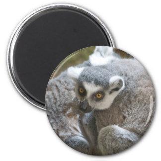 lemur 6 cm round magnet