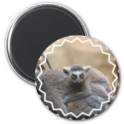 Lemur Baby  Magnet Fridge Magnets