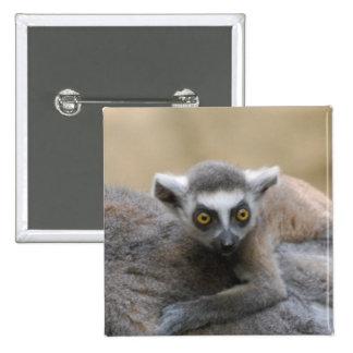 Lemur Baby  Pin