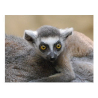 Lemur Baby  Postcards