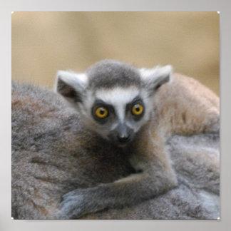 Lemur Baby Poster