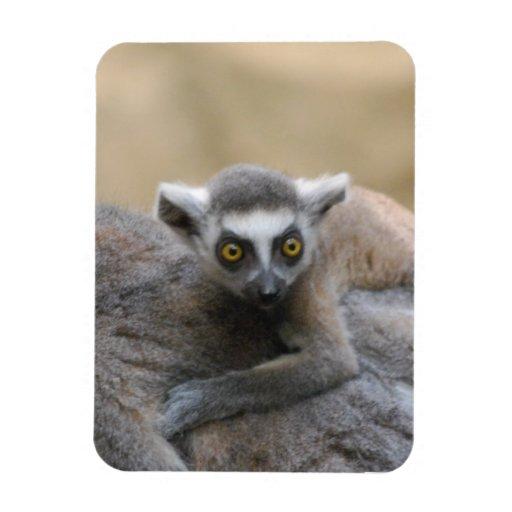Lemur Baby  Premium Magnet Rectangular Magnets