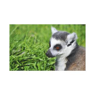Lemur Stretched Canvas Print