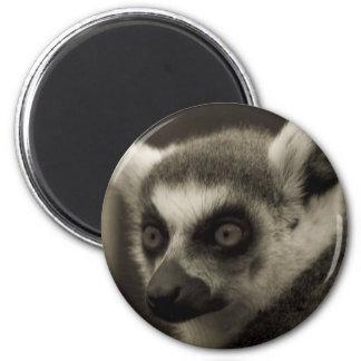 lemur face magnet
