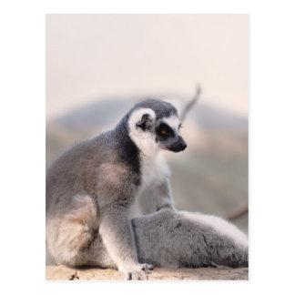 Lemur in Madagascar Postcard