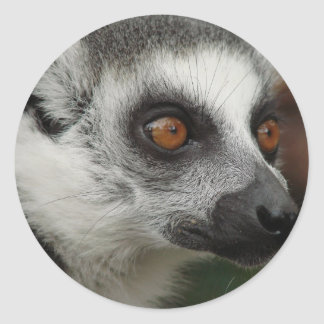 Lemur Photo Classic Round Sticker
