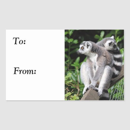 Lemur ring-tailed cute birthday to, from stickers