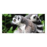 Lemur ring-tailed cute photo custom name bookmark personalised rack card