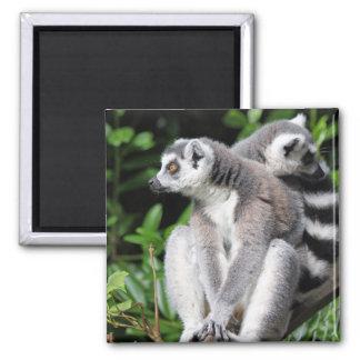 Lemur ring-tailed cute photo fridge magnet