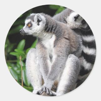 Lemur ring-tailed cute photo sticker, stickers