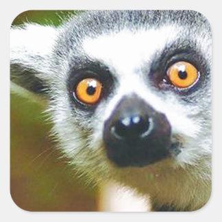 """Lemur"" Square Sticker"
