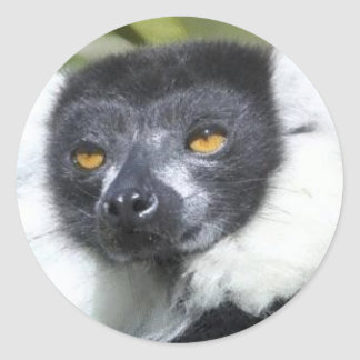 Lemur Stickers