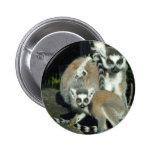 Lemurs Buttons