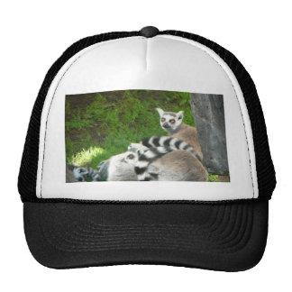 Lemurs Cap
