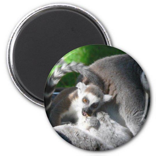 Lemurs Eating 6 Cm Round Magnet