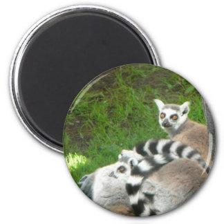 Lemurs Magnet