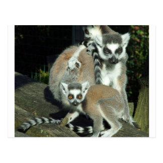 Lemurs Postcard