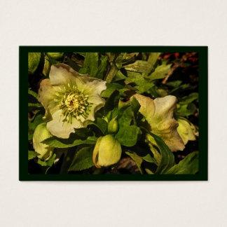 Lenten Rose Hellebore ATC Business Card