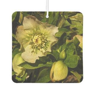 Lenten Rose Hellebore Flower Air Freshener