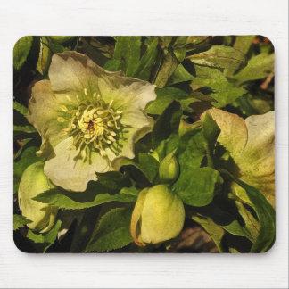 Lenten Rose Hellebore Mouse Mat