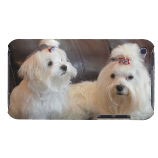 Leo & Teddy - Maltese Friends iPod Touch Covers