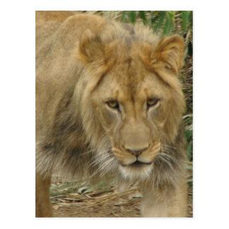 Leo the Lion Postcard