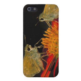 Leonard's skipper butterfly on Mexican sunflower iPhone 5/5S Cover
