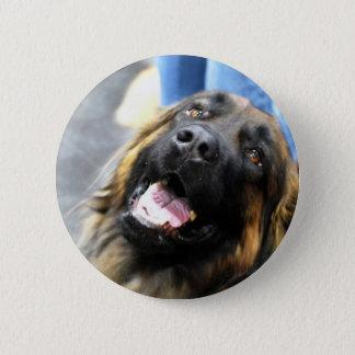 Leonberger  Buttons
