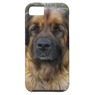 Leonberger dog beautiful photo portrait, gift iPhone 5 case