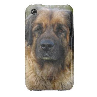 Leonberger dog beautiful photo portrait, gift iPhone 3 cases