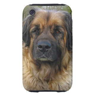 Leonberger dog beautiful photo portrait, gift iPhone 3 tough cover