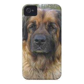 Leonberger dog beautiful photo portrait, gift iPhone 4 cases