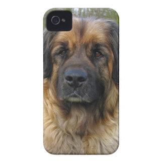 Leonberger dog beautiful photo portrait, gift iPhone 4 covers